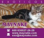 Card maynake 1