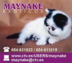 Card maynake 2