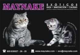 Card maynake 5